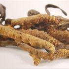 I Radicali liberi : Agaricus, Cordyceps e Reishi sono antiossidanti naturali