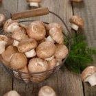 I funghi medicinali dalla tradizione medica asiatica alla conferma della scienza