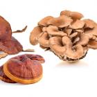 Come agiscono i funghi