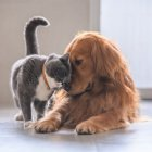 Anche per i nostri amici animali