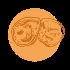 Auricolaria