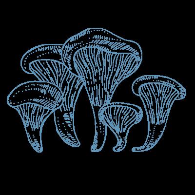 Pleorotus2