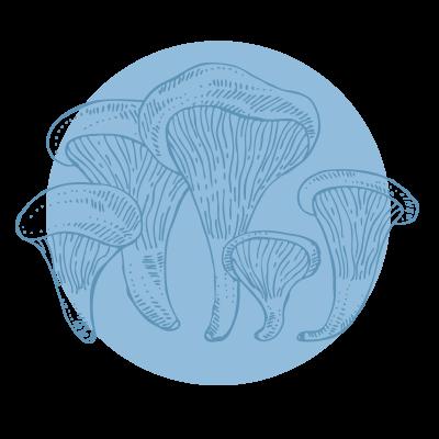 Pleorotus